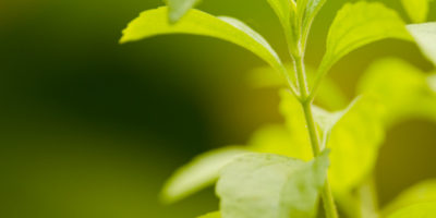 GreenLab13
